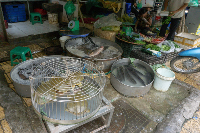 Lebende Fische Dong Xuan Markt in Hanoi