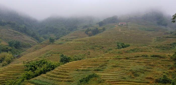 Reisfelder im Nebel in Sapa