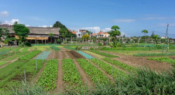 Gemüsedorf bei Hoi An