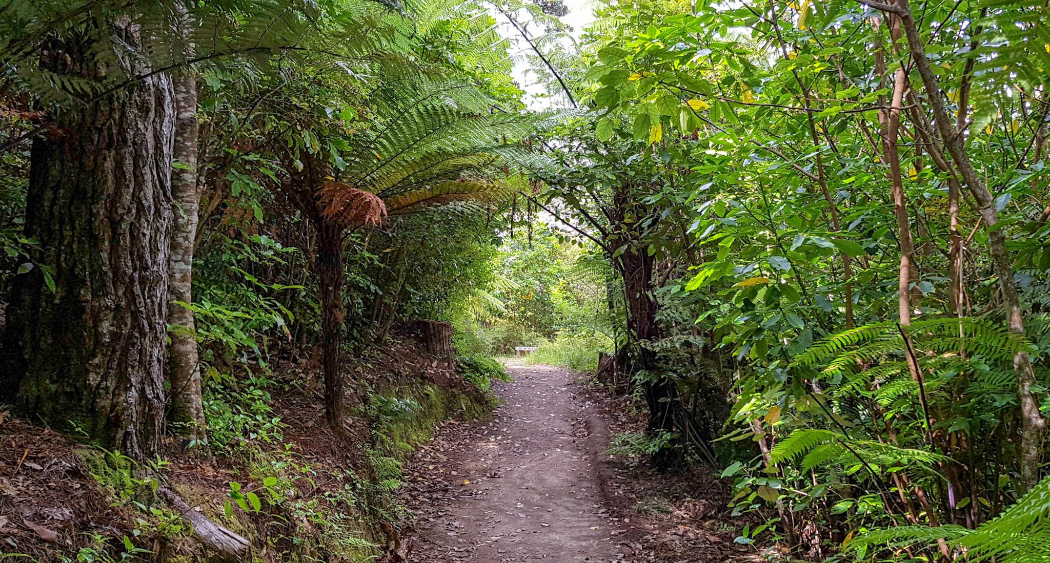 Wanderwege im Zealandia Naturschutzreservoir